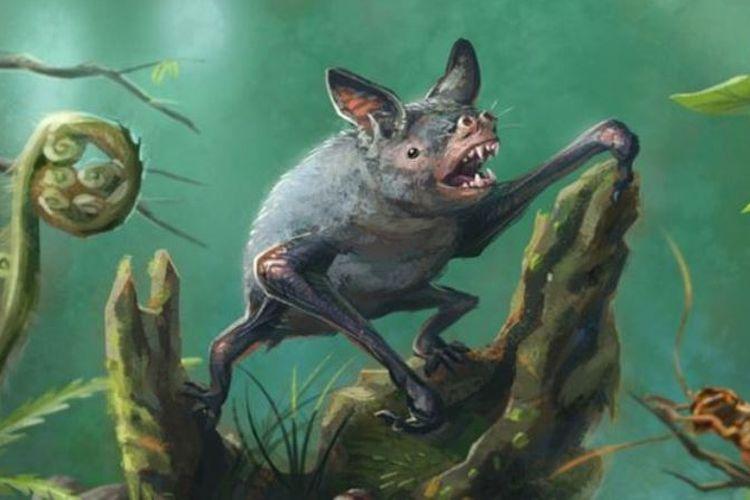Kelelawar purba, Vulcanops jennyworthyae, hidup belasan juta tahun yang lalu dan memiliki badan tiga kali lebih besar dari kelelawar saat ini.