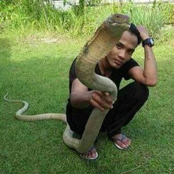 Rizky (17) tak menyangka bahwa ular king kobra yang dipeliharanya membuat nyawanya sendiri melayang.