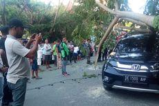 Angin Kencang di Ambon Sebabkan Pohon Tumbang, Timpa Mobil dan Sepeda Motor