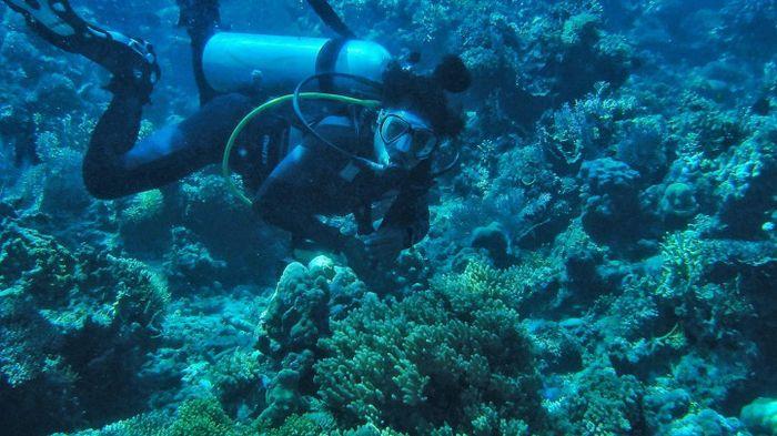 Menyelami Keindahan Bawah Laut di Togean