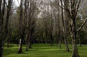 Kebun Cengkeh Gambesi, Primadona Baru Wisata Alam Ternate