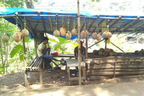 Durian Loji, Primadona Karawang yang Berpotensi Jadi Agrowisata