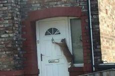 Kucing Ini Ketuk Pintu untuk Masuk Rumah