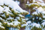 Tertimbun Salju saat Bermain, Gadis 12 Tahun di Chicago Meninggal