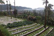 Sebelum Makan di Restoran Ini, Wisatawan Bisa Memetik Sayuran Organik