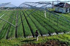 Tak Mau Ketinggalan Zaman, Pertanian Indonesia Gunakan Teknologi 4.0