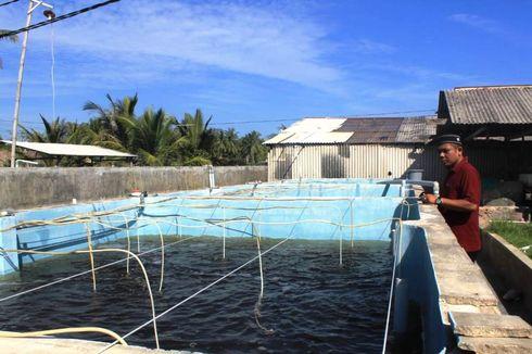 Desa di Aceh Utara Ini, Gunakan Dana Desa untuk Kembangkan Udang Vaname