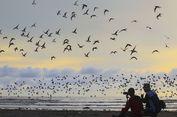 Menyambangi Pantai Cemara Sadu, Tempat Migrasi Burung-burung Cantik