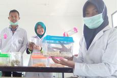 Ramu Getah Pisang dan Pare, Mahasiswa Magelang Buat Antiseptik Herbal