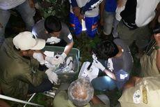 BKSDA Selamatkan Beruang Madu yang Terjerat Jaring di Aceh Timur