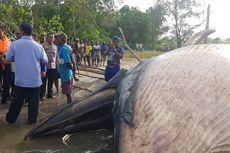 Bangkai Paus Terdampar Gegerkan Warga Kampung Timika Pantai, Papua