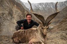 Pemburu Bayar Rp 1,5 Miliar untuk Izin Berburu Kambing Gunung Langka di Pakistan