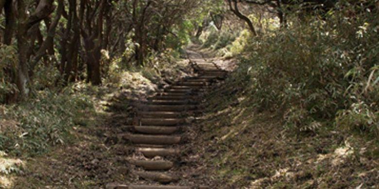 Untuk melihat Gunung Fuji, wisatawan harus melewati jalan yang dipenuhi oleh semak-semak di kanan dan kirinya untuk mencapai puncak Gunung Daruma yang berada di ketinggian 982 meter.