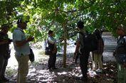 Tarik Wisatawan, Pemkab Kotawaringin Barat Kembangkan Agrowisata