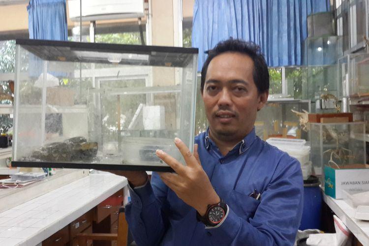 Pakar Herpetofauna dari Universitas Brawijaya, Nia Kurniawan memegang kotak berisi ular piton di salah satu laboratorium di Fakultas Ilmu Pengetahuan Alam Universitas Brawijaya, Kota Malang, Senin (24/6/2019)