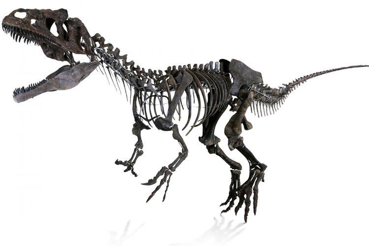Fosil dinosaurus misterius