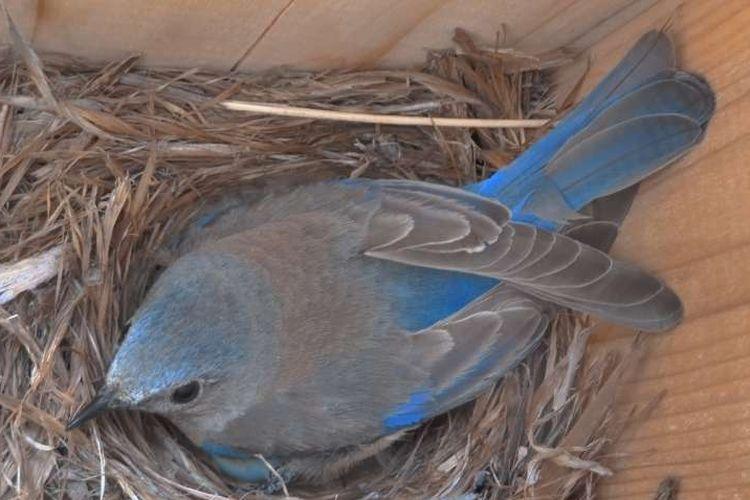 burung mengalami stres kronis setalah terus menerus terpapar polusi suara