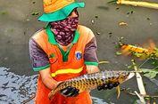 Ikan Arwana Emas yang Ditemukan di Kali Utan Kayu Mati