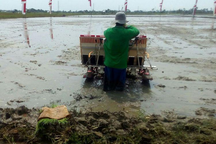 Petani di Kabupaten Tuban menanam padi menggunakan mesin tanam. Pemerintah mencanangkan Percepatan Serap Gabah Petani untuk 2017 sejak Maret hingga Agustus. Targetnya adalah 4 juta ton setara beras.