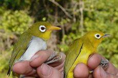 2 Spesies Burung Baru Ditemukan di Sulawesi, Ungkap Keunikan Evolusi