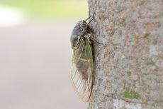 Demi Selamatkan Pepohonan, Warga Kota Ini Diajak Makan Serangga