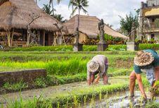 Ubud dalam Proses Penilaian Destinasi Gastronomi Dunia UNWTO