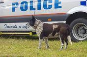 Anjing Tuli dan Setengah Buta Bantu Polisi Temukan Anak yang Hilang