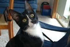 Tergiling Dalam Mesin Cuci Selama 30 Menit, Kucing Ini Selamat
