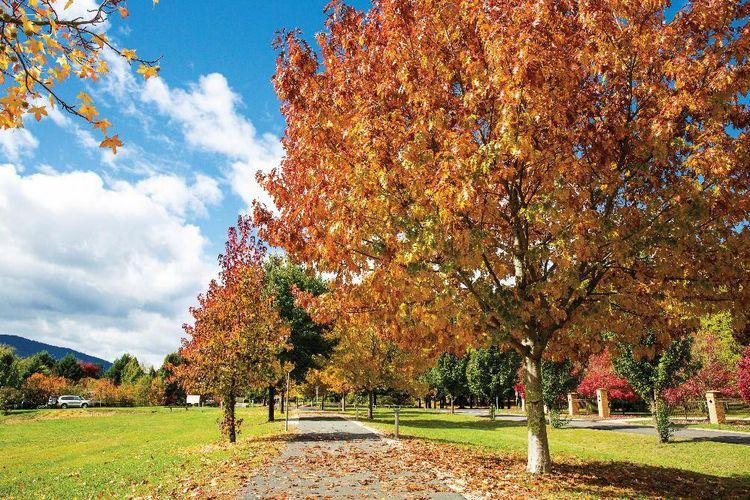 Musim Gugur di Bright, Victoria, Australia