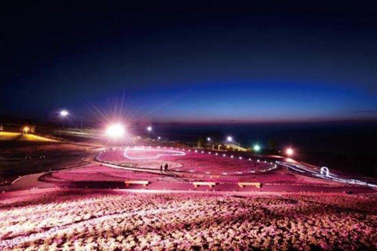Taman diberi tata cahaya lampu yang akan menyala pada pukul 19.00 sampai 21.00 saat Festival Shibazakura berlangsung