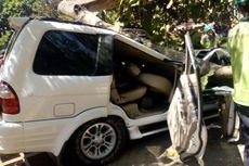 Universitas Pancasila Sebut Pohon Tumbang karena Tertiup Angin