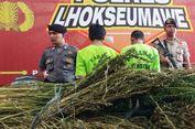 5 Hektare Ladang Ganja Ditemukan di Tengah Hutan Aceh