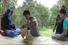 Di Polewali Mandar, Wisatawan Bisa Santap Durian Langsung di Kebun