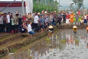 """Awali Hari Kedua di Garut, Presiden Jokowi """"Blusukan"""" ke Sawah"""