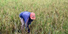 MUI dan NU Bersinergi dengan Pemerintah untuk Sejahterakan Petani