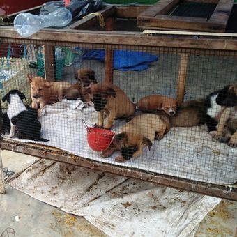 Pedagang anjing di Pasar Pancurbatu, Sumatera Utara