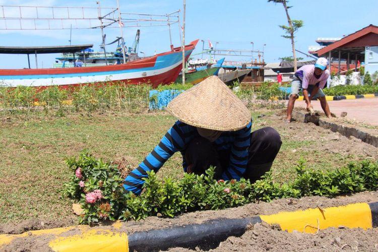 Seorang petugas tengah merapikan taman di kampung nelayan Tegalsari.