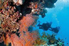 Setengah Terumbu Karangnya Mati, Great Barrier Reef Terancam Hilang