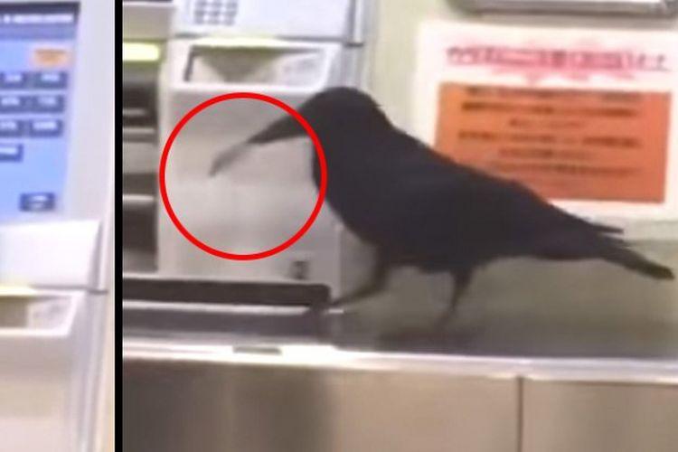 Burung gagak beli tiket kereta di Jepang
