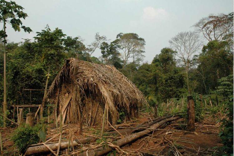 Kenampakan rumah dan lingkungan sekitar anggota terakhir suku terasing Amazon.