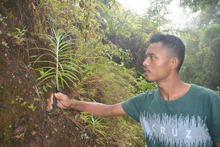 Seorang warga setempat, Karolus Hardiyanto Abu menunjukkan bunga Edelweis di lereng bukit Wajur, Desa Wajur, Kecamatan Kuwus Barat, Kabupaten Manggarai Barat, Flores, NTT, Rabu (2/1/2019). Tumbuhan liar Edelweis dijumpai di lereng bukit tersebut.