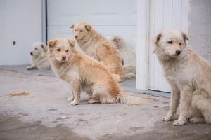Beri Makan Anjing Liar, Aktivis Hak Binatang Terancam Dipenjara