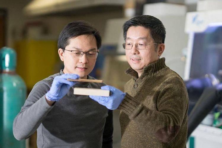 Professor Liangbing Hu (L) and Professor Teng Li menciptakan cara untuk membuat kayu sekuat baja