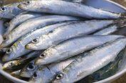 Ikan Sardin Bisa Jadi Sumber Omega-3