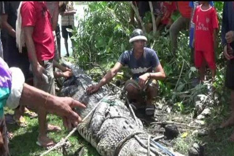 Buaya sepanjang 4,5 meter ditangkap petani karena sering menjarah tambak bandeng udang panami milik warga.