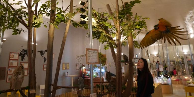 Pengunjung Moff animal cafe cabang Aeon Mall Makuhari Shintoshin di Prefektur Chiba, Jepang, ini bermain bersama burung kakatua.