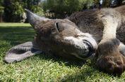Pertama Kali ke Australia, Aktivitas Apa yang Harus Dilakukan?