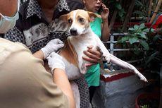 Cegah Rabies, Pemkot Jakut Beri Vaksin Gratis untuk Peliharaan Warga