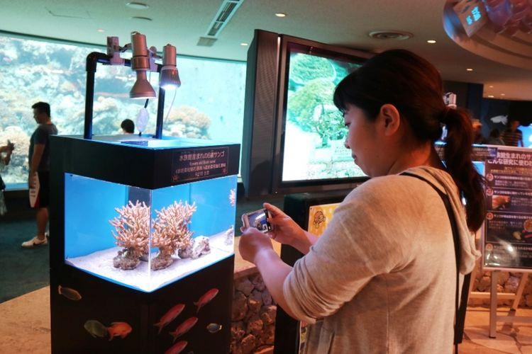 Wisatawan mengabadikan jenis-jenis karang yang ada di laut sekitar Okinawa, lewat aquascape yang ada di Akuarium Churami Okinawa, Okinawa, Jepang, Sabtu (30/6/2018). Aquarium ini merupakan yang terbesar di Jepang, berada di Kota Kunigami, Okinawa.