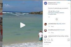 Viral Puluhan Ekor Hiu Muncul ke Tepi Pantai di Nusa Dua Bali, Ini Penjelasannya